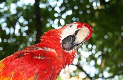 Pixabay-parrot-1070624_1280